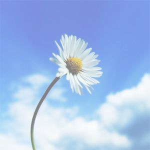 Lawrence Brouillet, Jr.